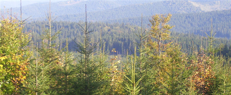 Інтенсивність ведення лісового господарства