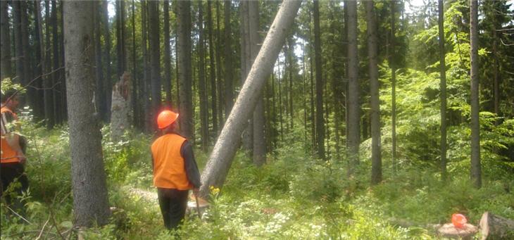 Обсяги заготівлі деревини та її реалізація